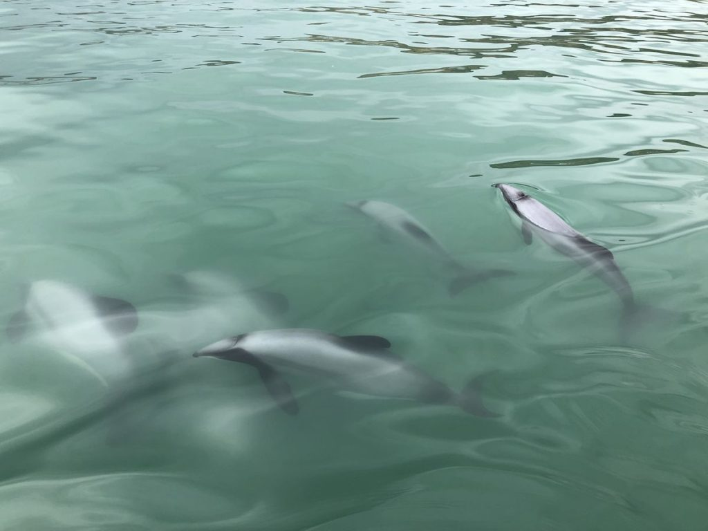 New Zealand: Drone to save My Dolphins |  Science