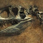 The study found that dinosaurs lived in herds